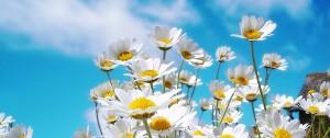 cropped-madeliefjes-voorkant-florant1.jpg